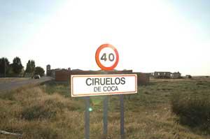 foto de CIRUELOS DE COCA